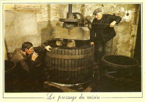 Pressage-du-raisin